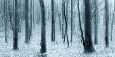 Bare Beech Forest in Winter, Abstract Study [M], Colour and Contrast Digitally Enhanced-Andreas Vitting-Photographic Print