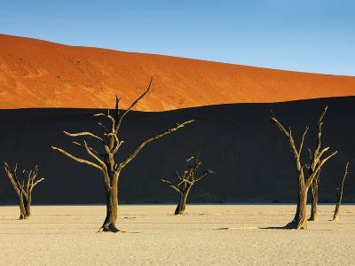 Bare trees at Dead Vlei-Frank Krahmer-Photographic Print