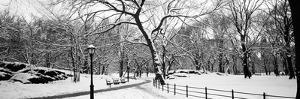 Bare Trees During Winter in a Park, Central Park, Manhattan, New York City, New York State, USA