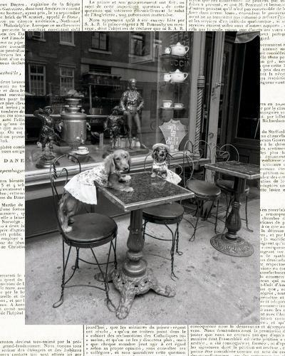 Barking at the Waiter with Newsprint-Jim Dratfield-Photo