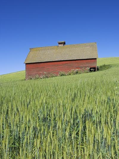 Barn Amongst Wheat Fields-Frank Lukasseck-Photographic Print