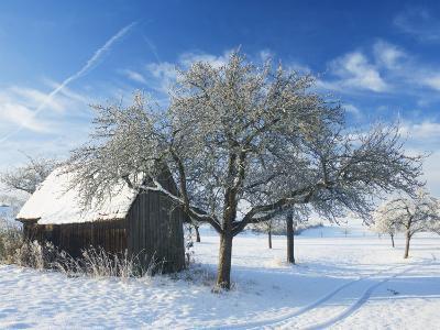 Barn and Apple Trees in Winter, Weigheim, Baden-Wurttemberg, Germany, Europe-Jochen Schlenker-Photographic Print