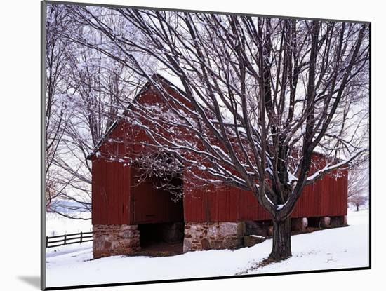Barn and Maple after winter storm, Fairfax County, Virginia, USA-Charles Gurche-Mounted Photographic Print