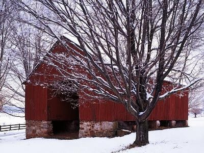Barn and Maple after winter storm, Fairfax County, Virginia, USA-Charles Gurche-Premium Photographic Print
