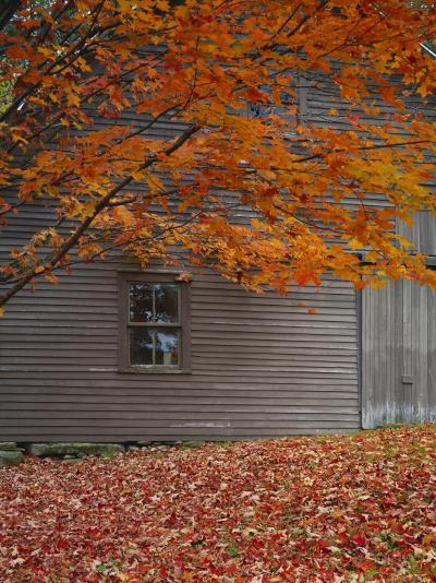 Barn and Maple Tree in Autumn, Vermont, USA-Scott T^ Smith-Photographic Print