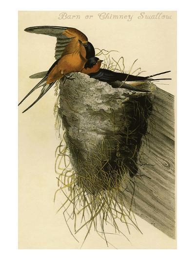 Barn or Chimney Swallow-John James Audubon-Art Print