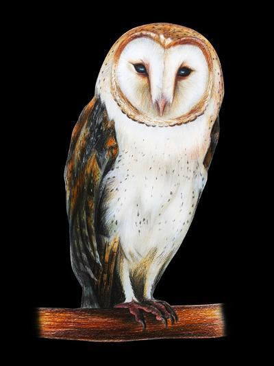 Barn Owl Drawing on Black Background- viktoriya_art-Art Print
