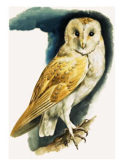 Barn Owl, Illustration from 'Peeps at Nature', 1963-English Photographer-Giclee Print