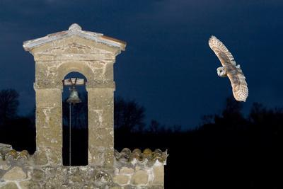 https://imgc.artprintimages.com/img/print/barn-owl-tyto-alba-flying-over-a-church-in-pitigliano-tuscany-italy_u-l-q11pvts0.jpg?p=0