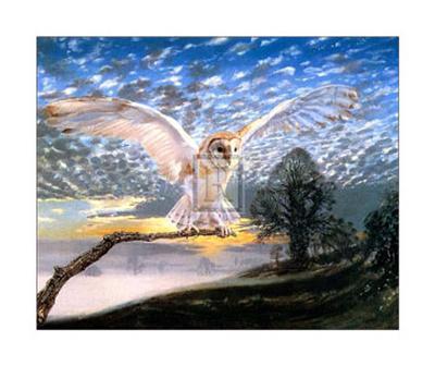 Barn Owl-J Cooksley-Art Print