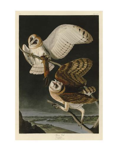 Barn Owl-John James Audubon-Art Print