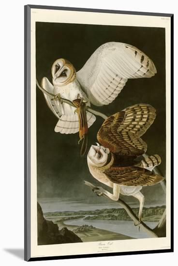 Barn Owl-John James Audubon-Mounted Premium Giclee Print