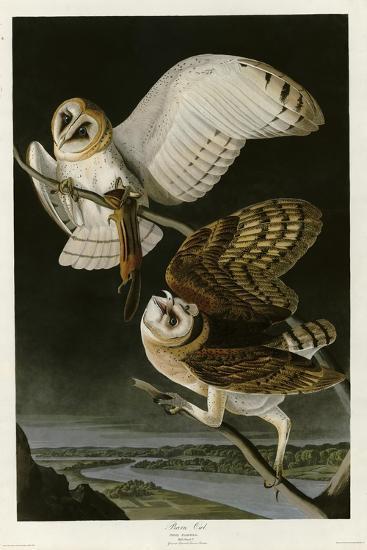Barn Owl--Giclee Print