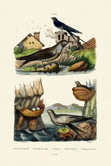 Barn Swallow, 1833-39--Giclee Print