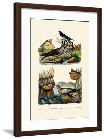 Barn Swallow, 1833-39--Framed Giclee Print