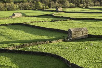 Barns and Dry Stone Walls at Gunnerside-John Woodworth-Photographic Print
