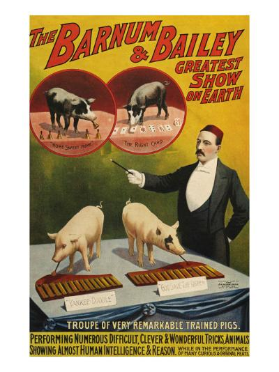 Barnum and Bailey, Poster, 1900--Giclee Print