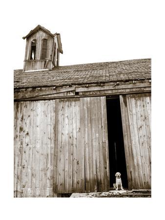 https://imgc.artprintimages.com/img/print/barnyard-dog_u-l-q1bl4fn0.jpg?p=0