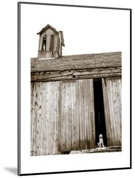 Barnyard Dog-Jim Dratfield-Mounted Art Print