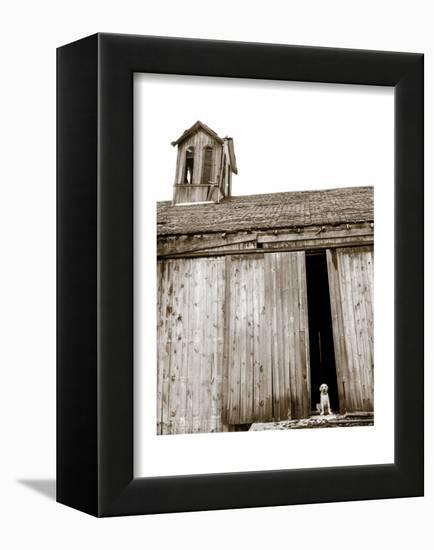 Barnyard Dog-Jim Dratfield-Framed Stretched Canvas