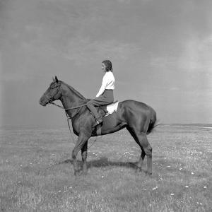 Newmarket Horse by Baron Nahum