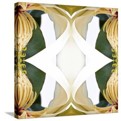 Baroque Magnolia2-Rose Anne Colavito-Stretched Canvas Print
