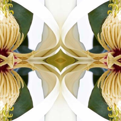 Baroque Magnolia-Rose Anne Colavito-Art Print