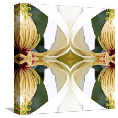 Baroque Magnolia-Rose Anne Colavito-Stretched Canvas Print