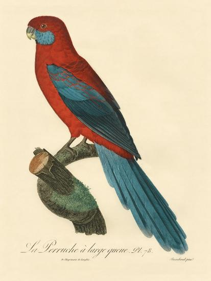 Barraband Parrot No. 78-Jacques Barraband-Art Print