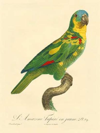 Barraband Parrot No. 89-Jacques Barraband-Art Print