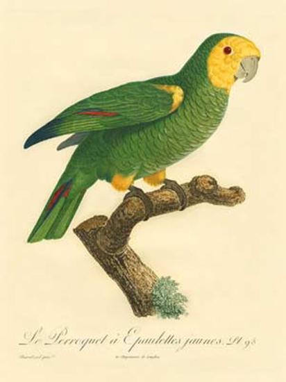 Barraband Parrot No. 98-Jacques Barraband-Art Print
