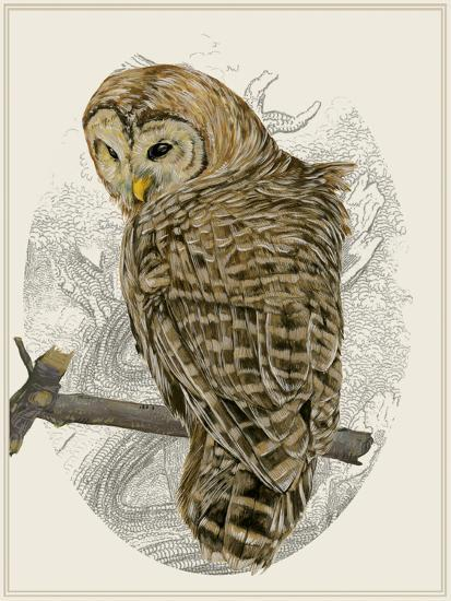 Barred Owl II-Melissa Wang-Art Print