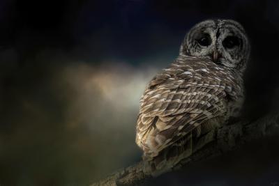 Barred Owl on a Winter Night-Jai Johnson-Giclee Print