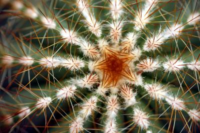 Barrel Cactus Spines-Dr. Keith Wheeler-Photographic Print