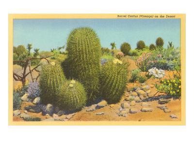 Barrel Cactus--Art Print