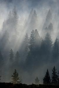 Fog Begins to Burn Off As the Sun Shines Through a Forest by Barrett Hedges