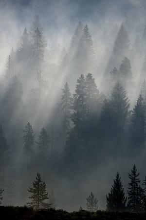 Fog Begins to Burn Off As the Sun Shines Through a Forest