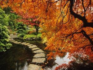 Autumn Colors in Butchart Gardens, Victoria, Vancouver Island, British Columbia, Canada by Barrett & Mackay