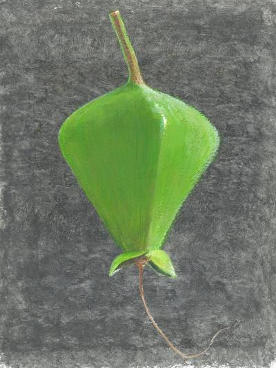 Barringtonia Acutangula-Lincoln Seligman-Giclee Print