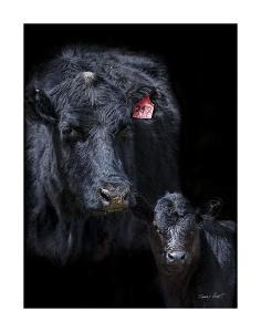 Black Angus by Barry Hart