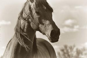 Lonesome Dove by Barry Hart