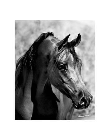 HORSE PHOTO ART PRINT Looking Through the Eyes of Love Barry Hart Poster 19x13