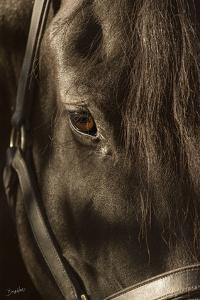 Their Eyes are the Window to their Souls by Barry Hart