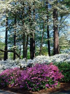 Norfolk Botanical Gardens, VA by Barry Winiker