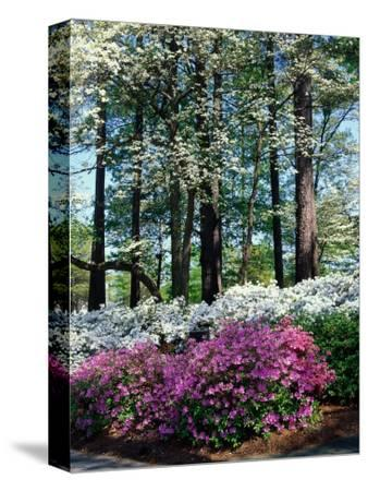 Norfolk Botanical Gardens, VA