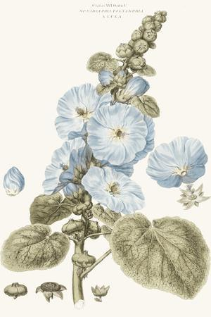 Bashful Blue Florals IV-John Miller-Art Print
