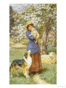 Lambing Time by Basil Bradley
