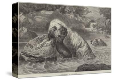 Otter-Hounds