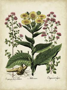 Besler Florilegium I by Basilius Besler