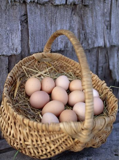 Basket of Brown Eggs-Michael Melford-Photographic Print